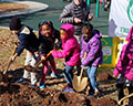 Chapel Hill Celebrates Arbor Day 2014