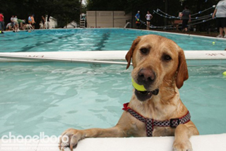 DOG AT POOL
