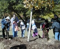Chapel Hill To Host 15th Annual Arbor Day