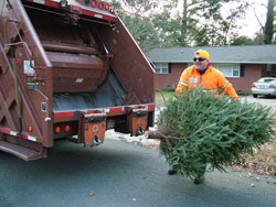 Chapel Hill Public Works crews collect Christmas trees for mulching